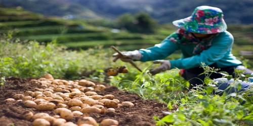نمایشگاه کشاورزی قونیه
